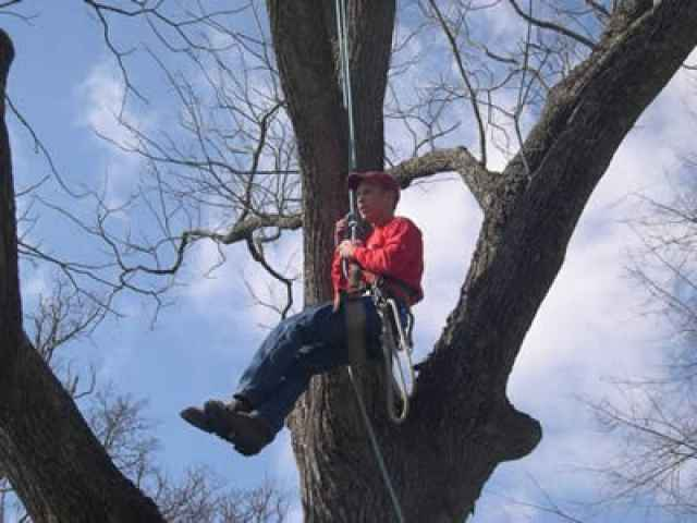 Students like to hang out and learn about Arboriculture!