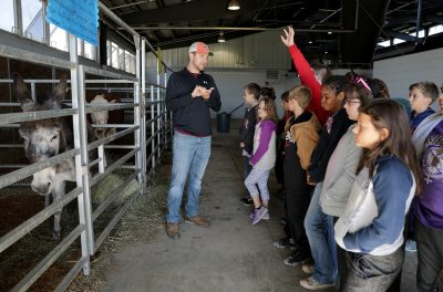 4-h students learning about agriculture in a barn
