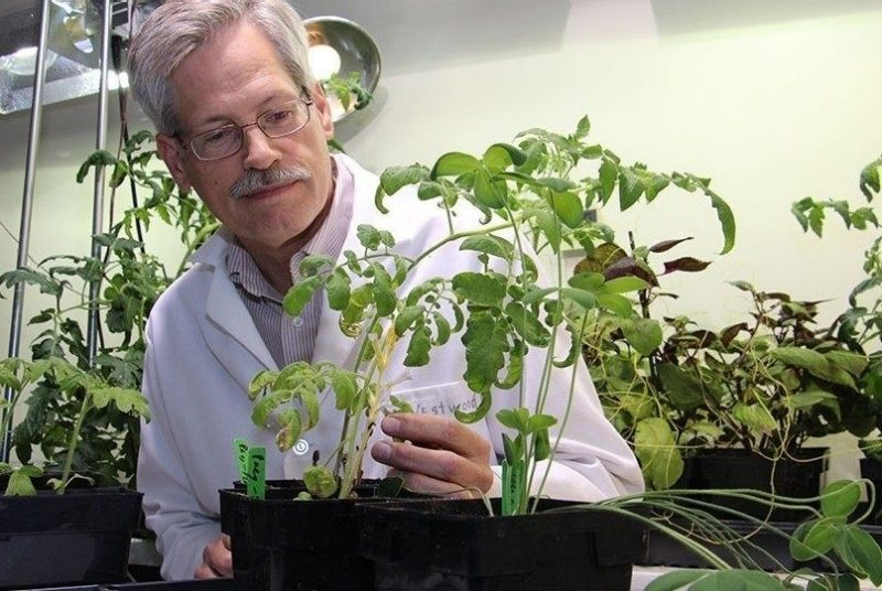 Jim Westwood receives Fulbright U.S. Scholar Award to France for parasitic plant research
