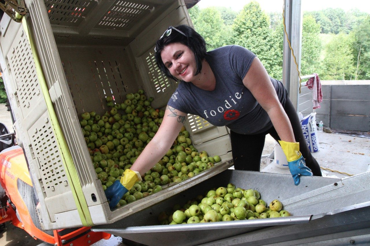 A student sorts apples at a farm.