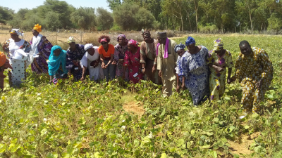 Farmer group in Senegal